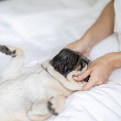 Devenir ostéopathe animalier: ce qu'il faut savoir