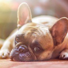 Comportementaliste canin : Mon chien a-t-il besoin d'un comportementaliste canin ou d'un dresseur ?