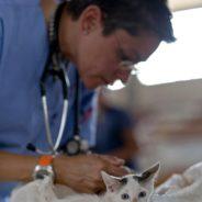 Soigneur animalier : Tout ce que vous devez savoir sur le métier