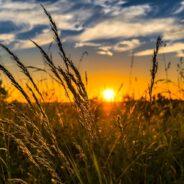 Xavier Niel lance sa propre école d'agriculture respectueuse de l'environnement !